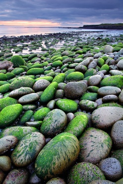 Green boulders by the beach