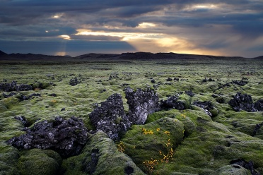 Moss-covered Hraun at Reykjanes