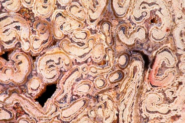 Petrified Tree Fern 3