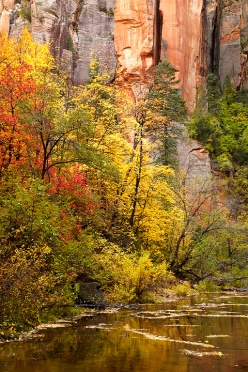West Fork of the Oak Creek Canyon