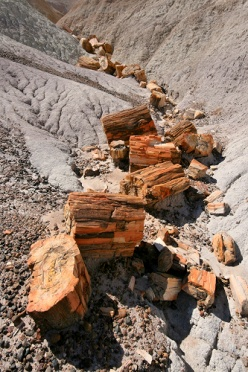 Blue Mesa Petrified Logs