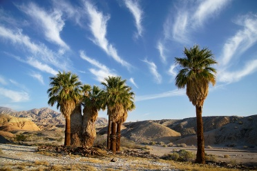 Palm Oasis at Anza Borrego