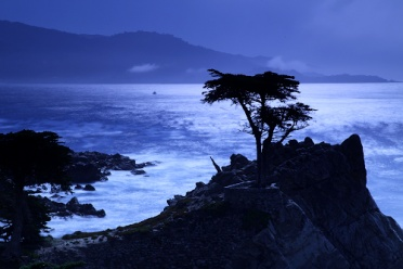 Lone Cypress 17 Miles Drive