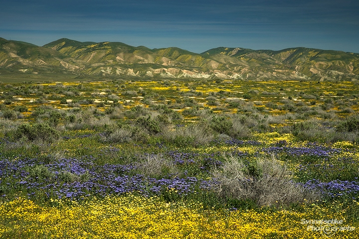 Carrizo Plain with blooming flowers