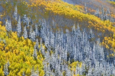 Aspen Enchanted Forest