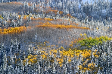 Enchanted Aspen - Rocky Mountains