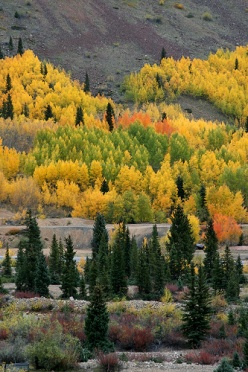 Aspen Grove in Flames