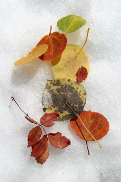 Colorful Fall Foliage in the Snow