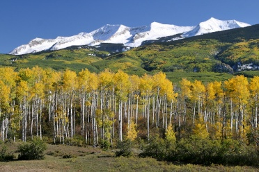 Kebler Pass Road - Fall Foliage