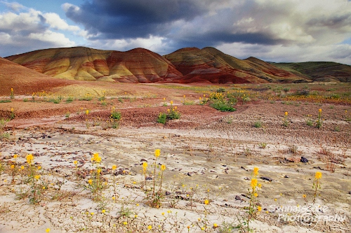 Painted Hills and Bee Plants