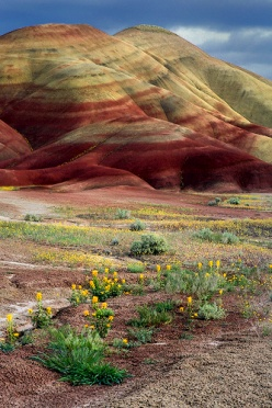 Painted Hills and Flowers