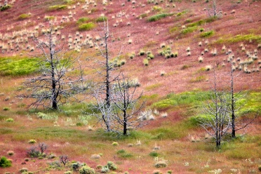 Painted Hills Trees