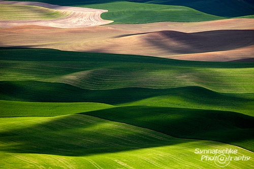 Palouse Fields Detail