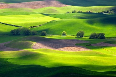 The Green of Palouse