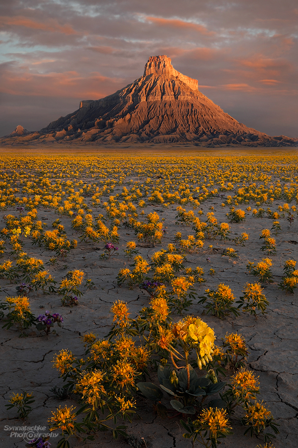 Wildflowers Factory Butte