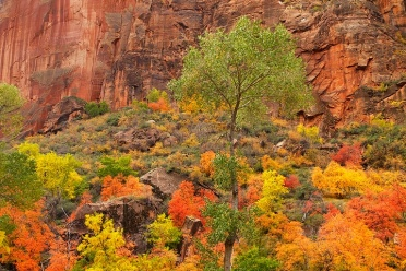Zion Fall Color Display
