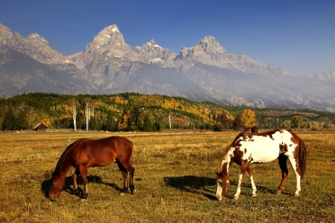 Grand Teton NP Two Horses