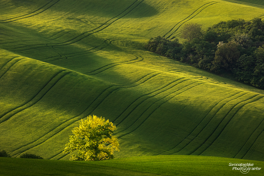 Fields of Moravia
