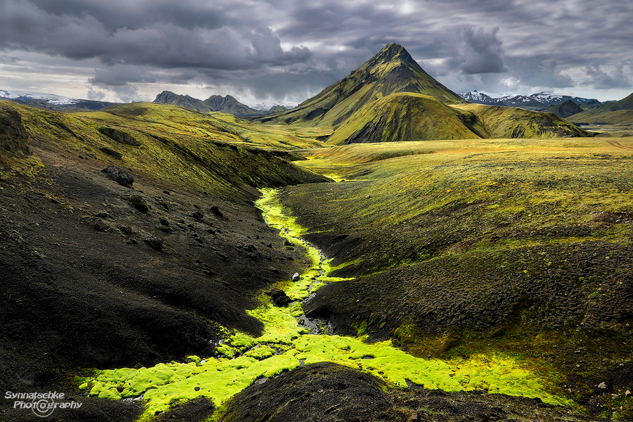 Neon Green Moss at the Highlands in Iceland